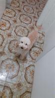 Barboncino 8 mesi